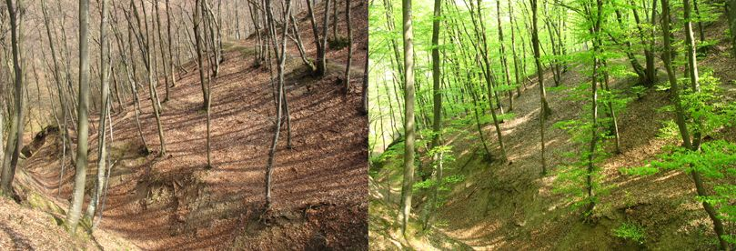 Defrences between trees during the spring and autumn on Fruska gora.