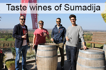Šumadian wines: Divine tastes of the Serbian wine region