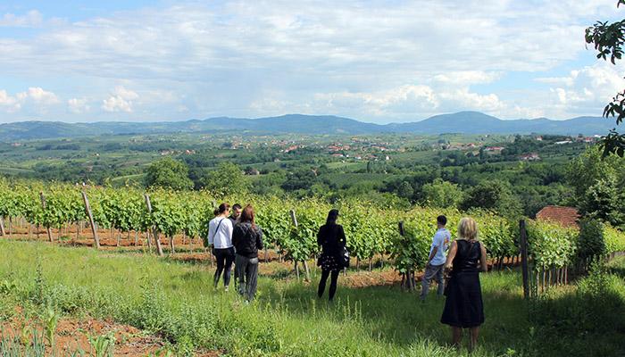 Ljudi gledaju vinovu lozu i slučaju priče o vinima Šumadije.